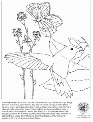 Printable Hummingbird Coloring Pages Online   46714