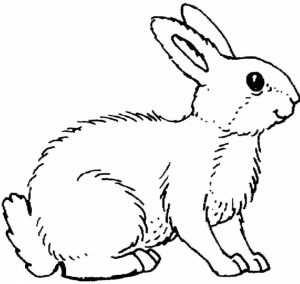 Printable Rabbit Coloring Pages for Kids   BV21Z
