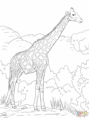 Realistic Giraffe Coloring Pages for Adults   66218