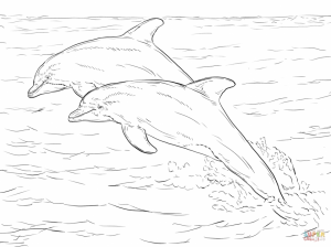 Sea Animal Coloring Pages of Dolphin To Print   28501