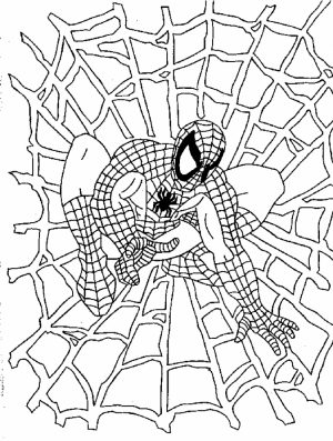 Spiderman Coloring Pages Free Printable   606700