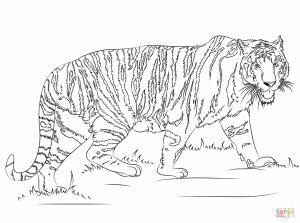 Tiger Coloring Pages Printable   90426