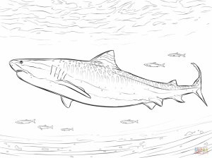 Tiger Shark Coloring Pages   46721