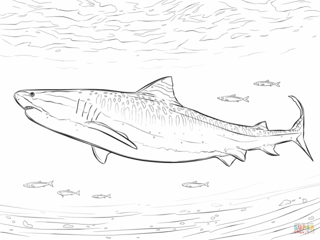 Get This Tiger Shark Coloring Pages 46721