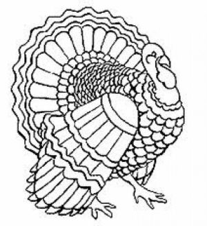 Turkey Coloring Pages Printable   63178