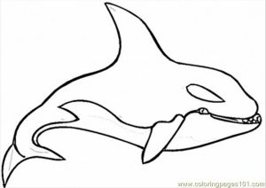 Whale Coloring Pages Free Printable   51582