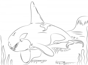 Whale Coloring Pages Free Printable   9548