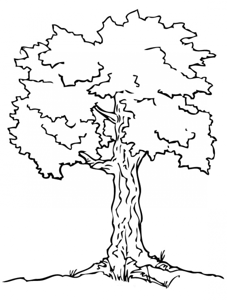 Get This Free Preschool Tree Coloring Pages To Print T77ha Kindergarten Tree Coloring Page