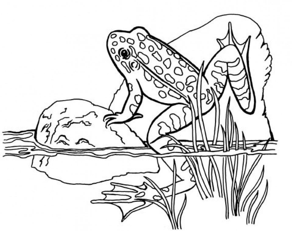 Get This Preschool Frog Coloring Pages to Print 4ABJZ