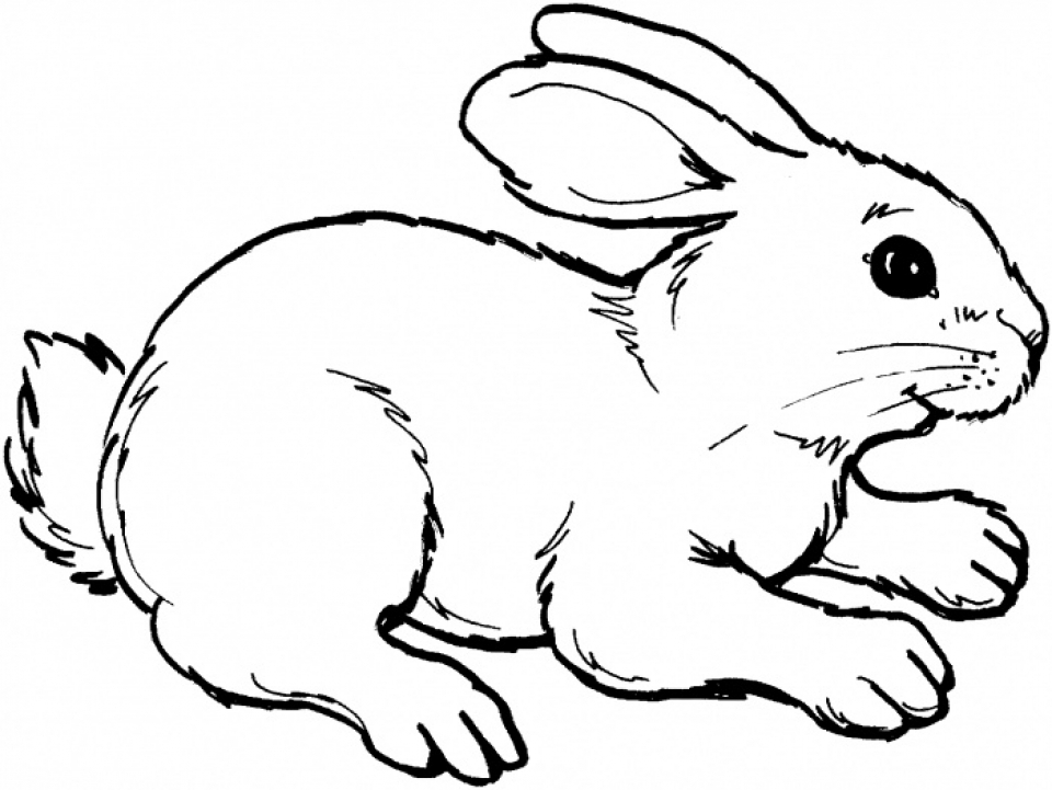 Get This Rabbit Coloring Pages to Print Online 625N6