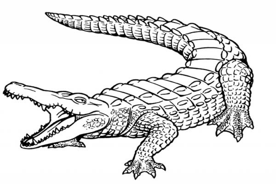 Get this alligator coloring pages printable for kids r1n7l for Coloring pages crocodile