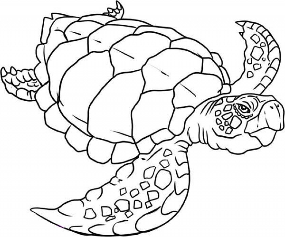Get This Easy Turtle Coloring Pages