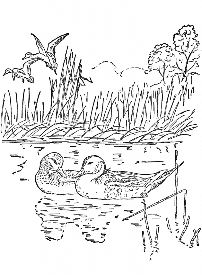 Get This Free Preschool Nature Coloring Pages to Print p1ivq