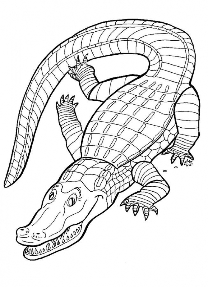Get This Free Printable Alligator Coloring Pages for Kids 5gzkd !