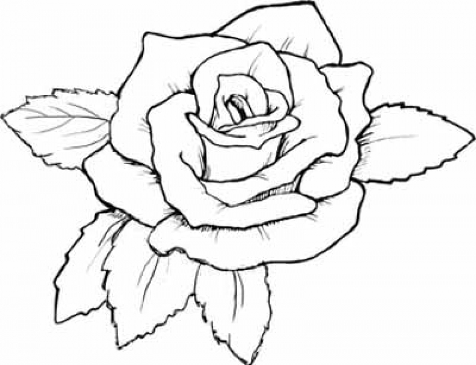 Get This Free Roses Coloring Pages for Adults to Print 12490