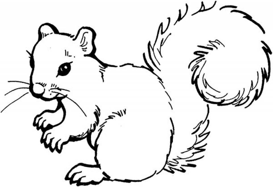 get this free squirrel coloring pages for kids yy6l0