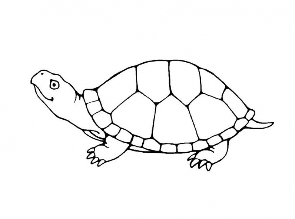 free turtle coloring pages for kids yy6l0 - Turtle Coloring Pages