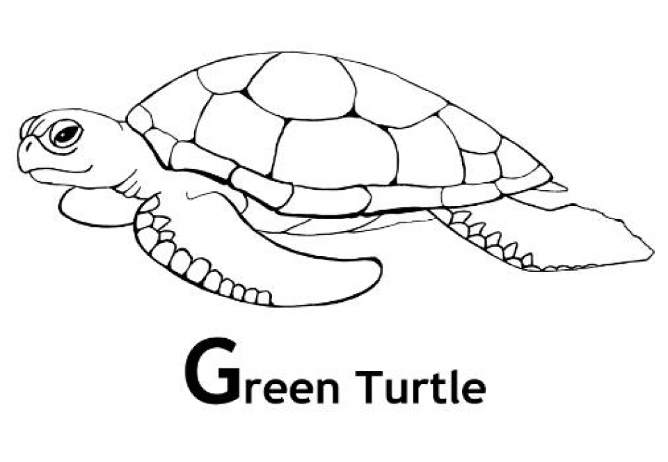 Get this image of turtle coloring pages to print for kids for Turtle color