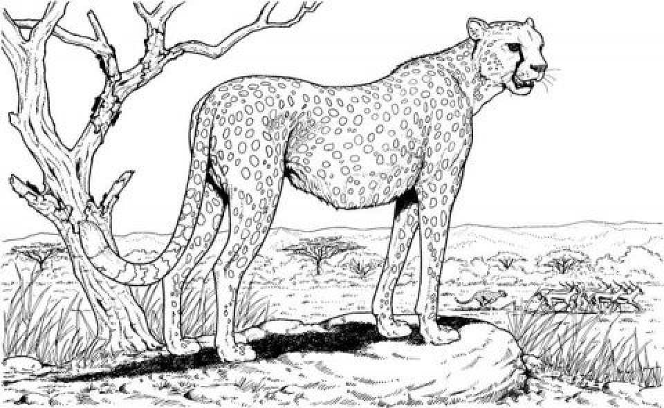 Get This Preschool Nature Coloring Pages to Print nob6i !