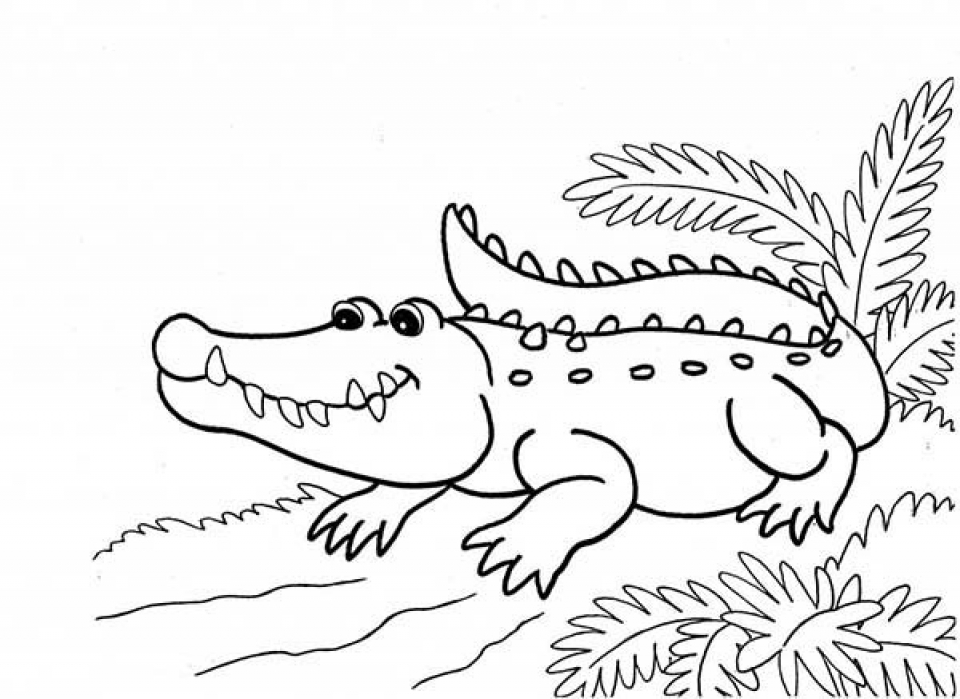 printable alligator coloring pages for kids 5prtr - Alligator Coloring Page