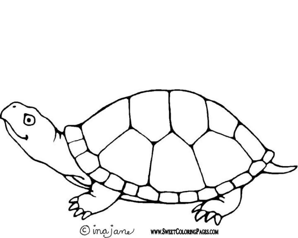 Paw Patrol Coloring Pages Free To Print 53867 Printable Image Of Turtle T2o1m