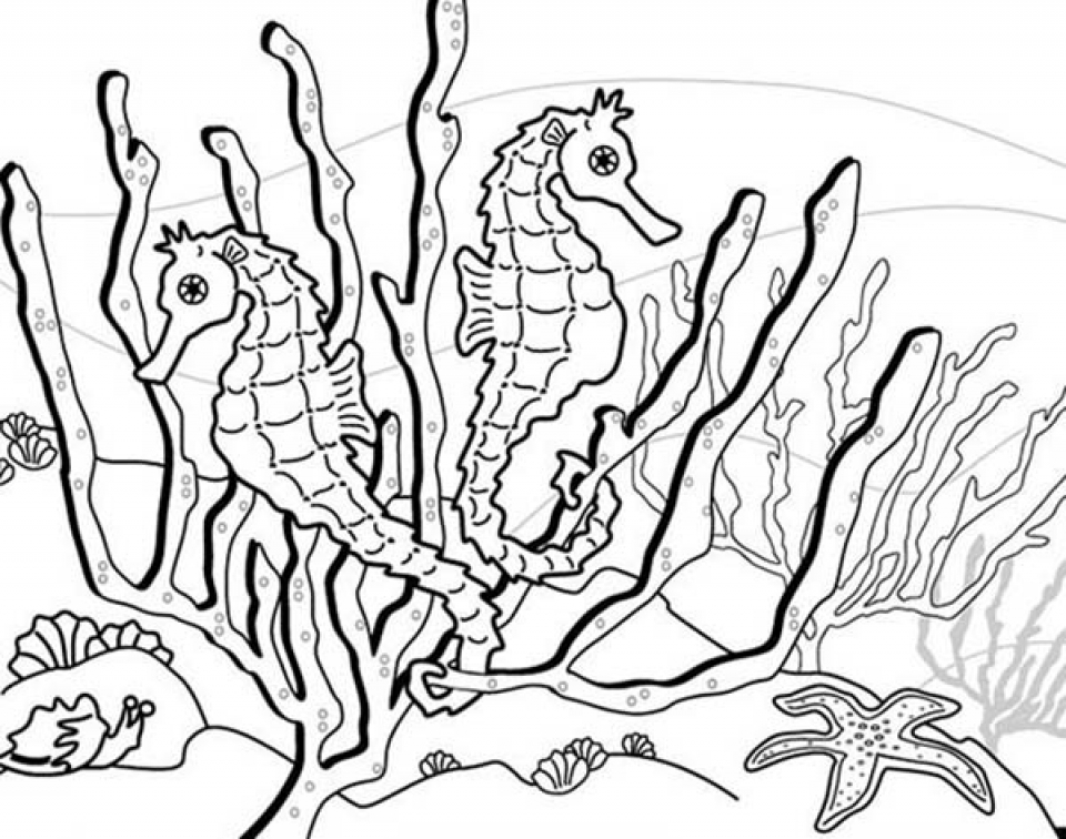 printable seahorse coloring pages online 34394 - Realistic Seahorse Coloring Pages