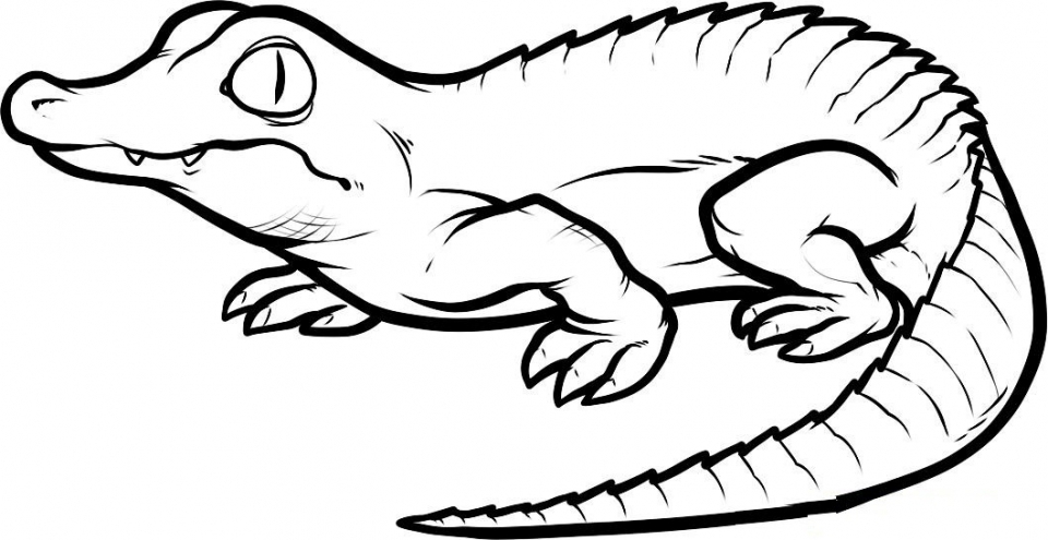 printables for toddlers alligator coloring pages online free m7pzl - Letter A Alligator Coloring Pages