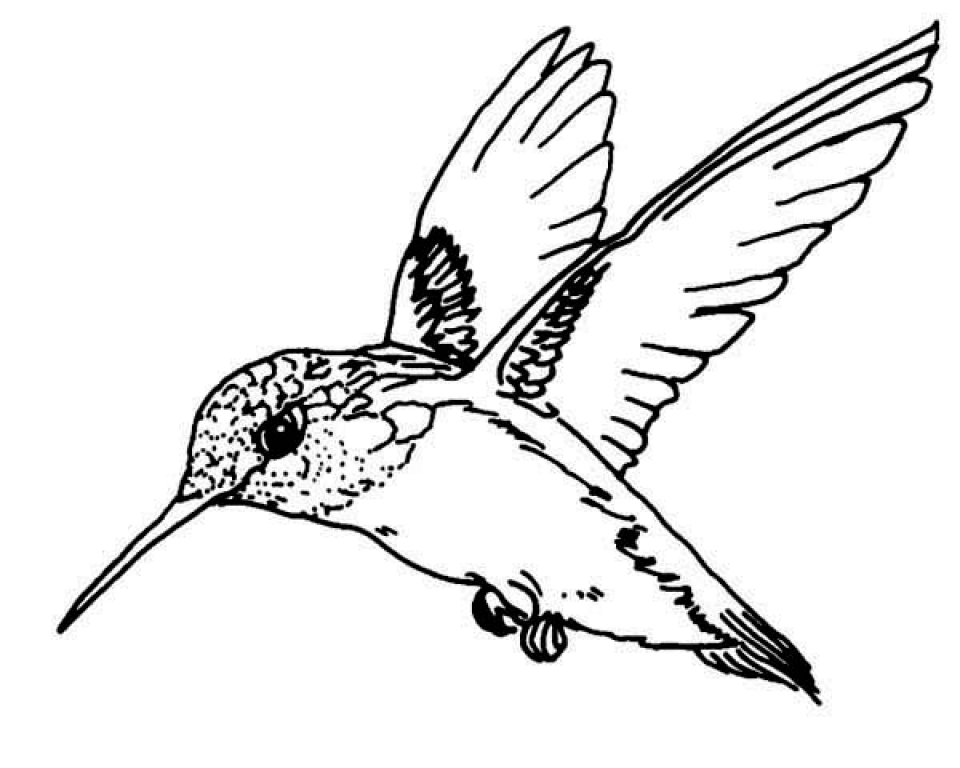 Get This Free Hummingbird Coloring Pages 34753