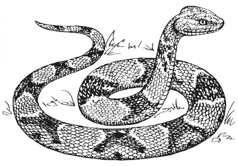 Get this free snake coloring pages 07599 for Snakes coloring pages