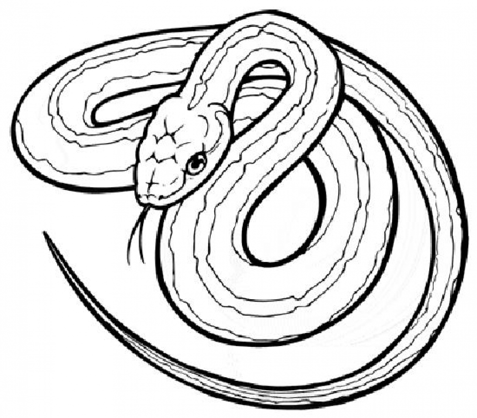 Get This Free Snake Coloring Pages 33958