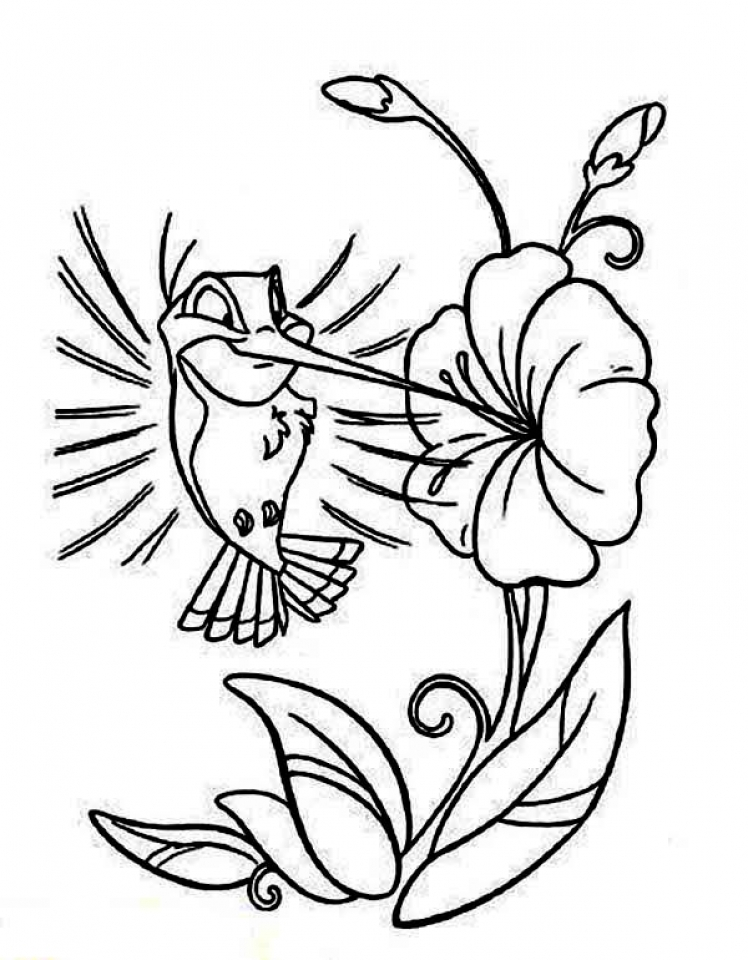 hummingbird coloring pages free printable 56449 - Hummingbird Flower Coloring Pages