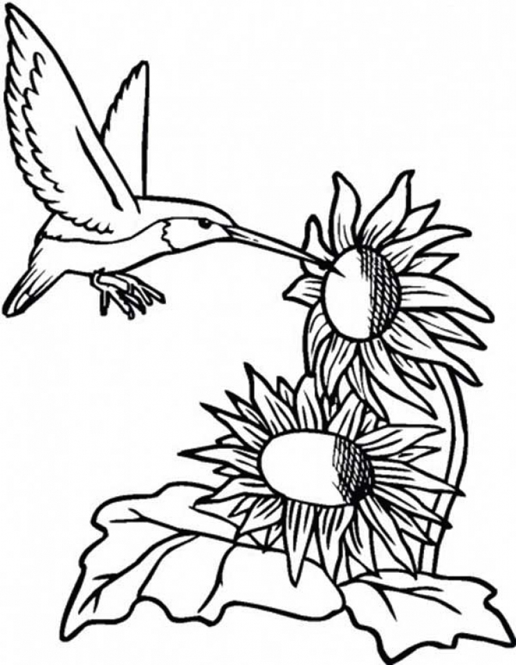 Get This Hummingbird Coloring Pages Free Printable 76955 !