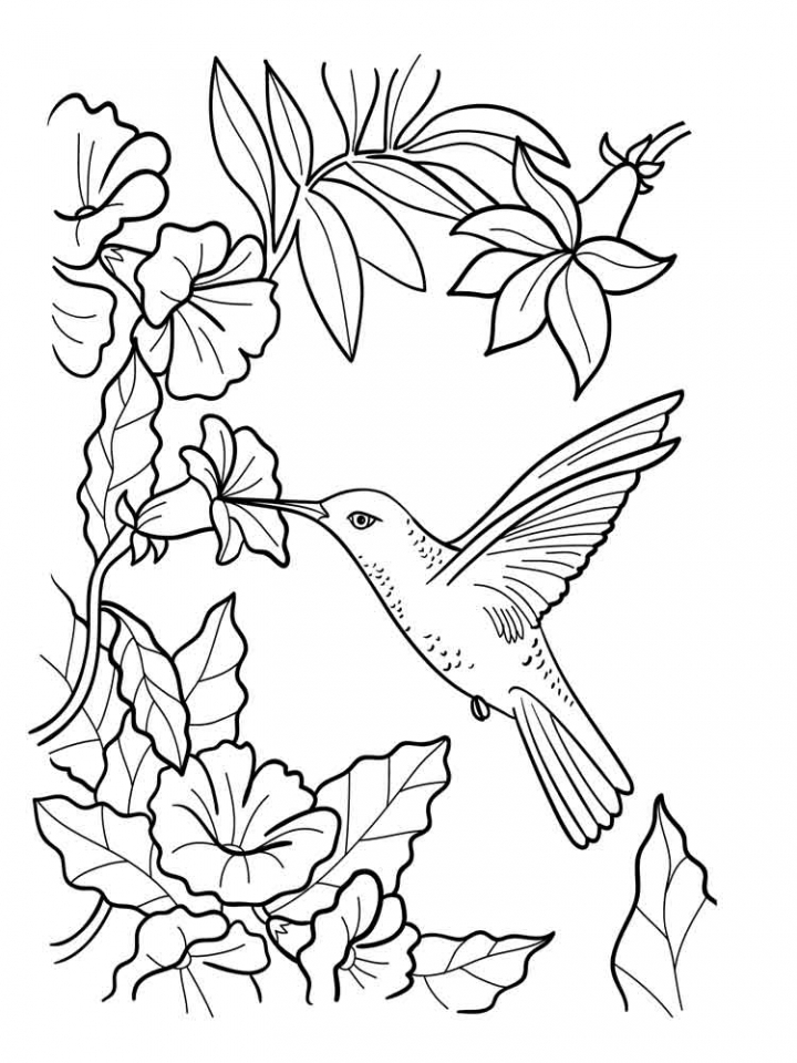 20 Free Printable Hummingbird Coloring Pages