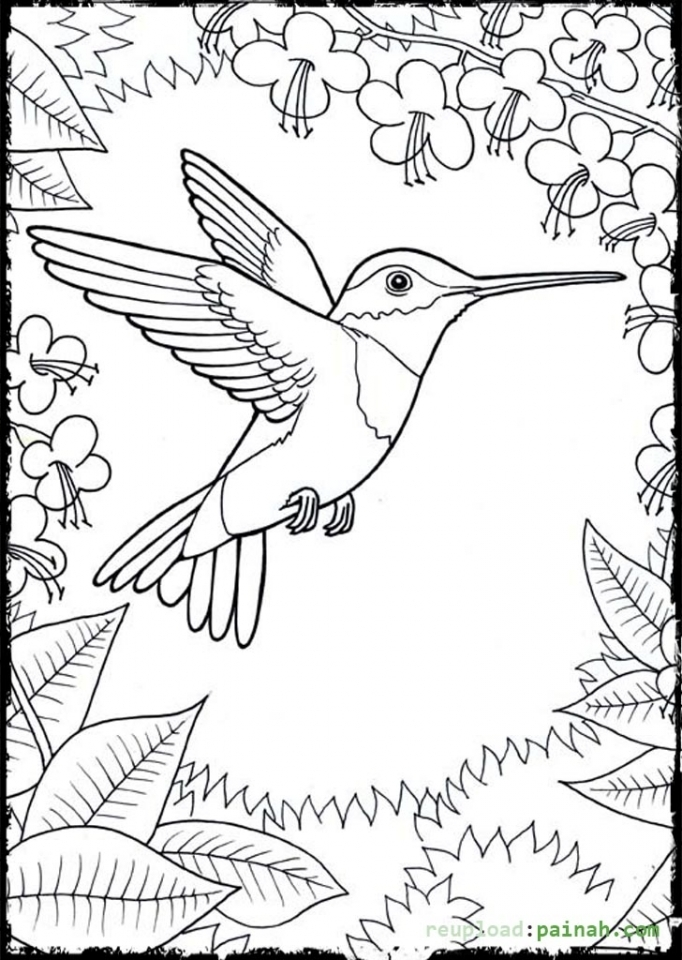 Get This Online Hummingbird Coloring Pages 28344 !