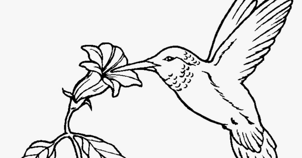 Get This Online Hummingbird Coloring Pages 50959