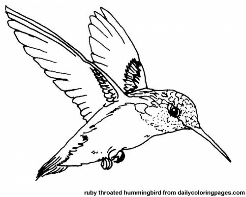 Get This Printable Hummingbird Coloring Pages 00467 !