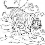 20 Free Printable Tiger Coloring Pages  EverFreeColoringcom