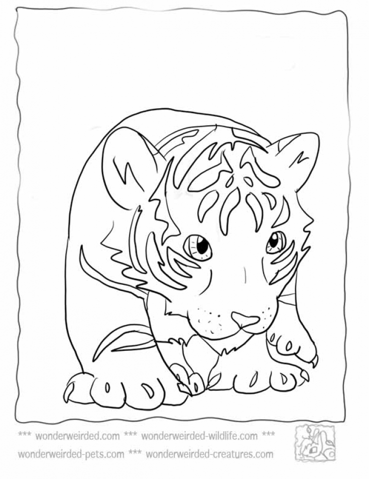 Baby Tiger Coloring Pages To Print 90156