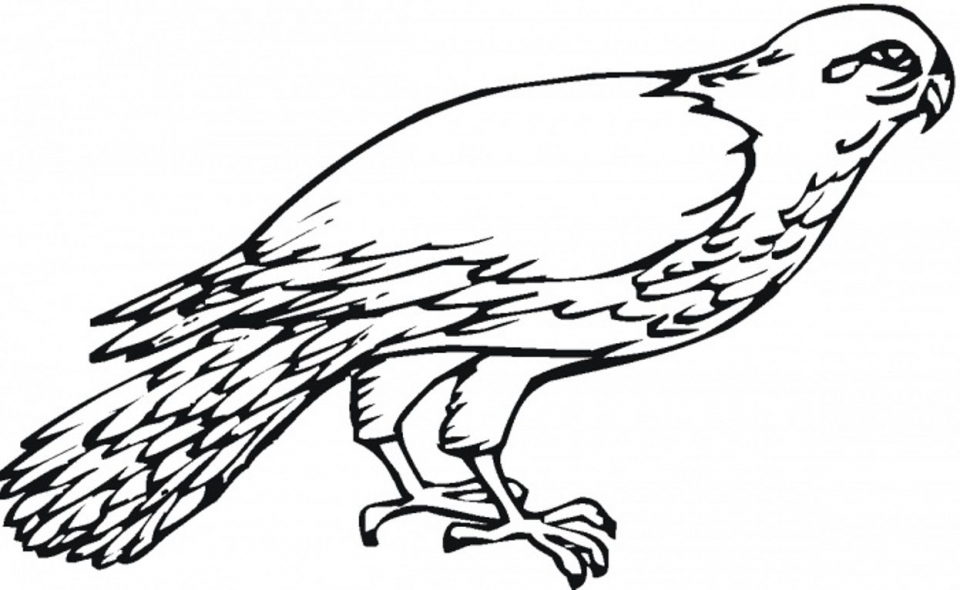 online bird coloring pages - photo#16