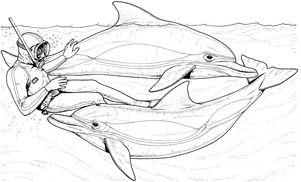 Get This Dolphin Coloring Pages Free to Print 64581 !