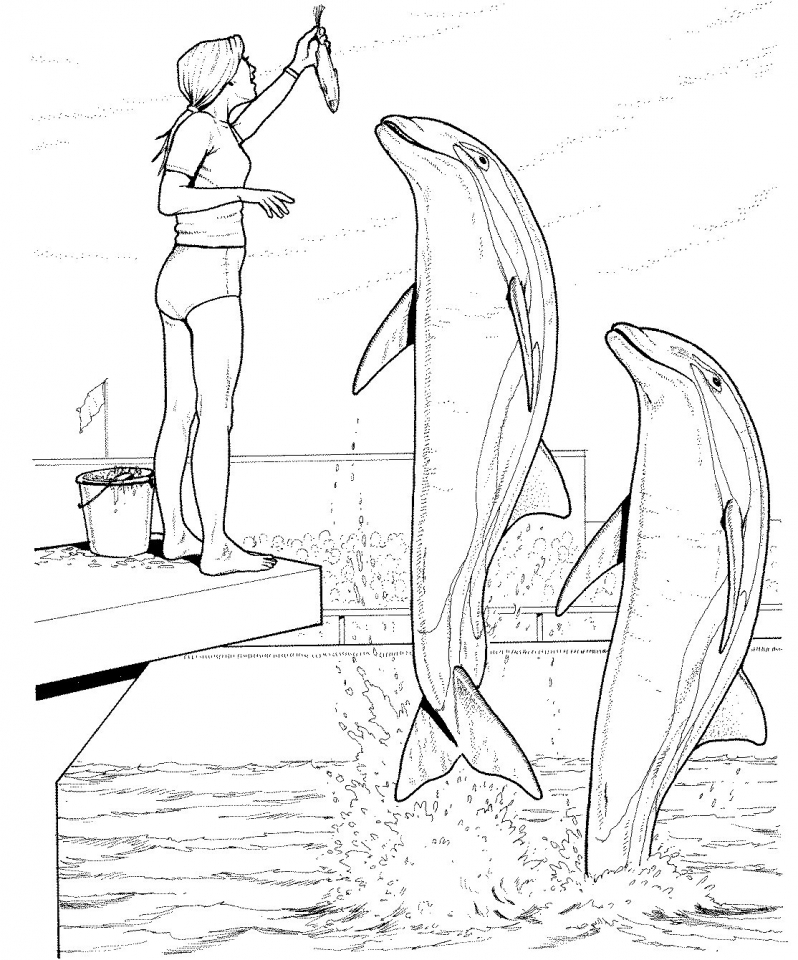 Get This Free Printable Dolphin Coloring Pages for Kids 63519