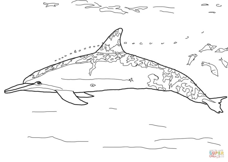 hard dolphin coloring pages - photo#23