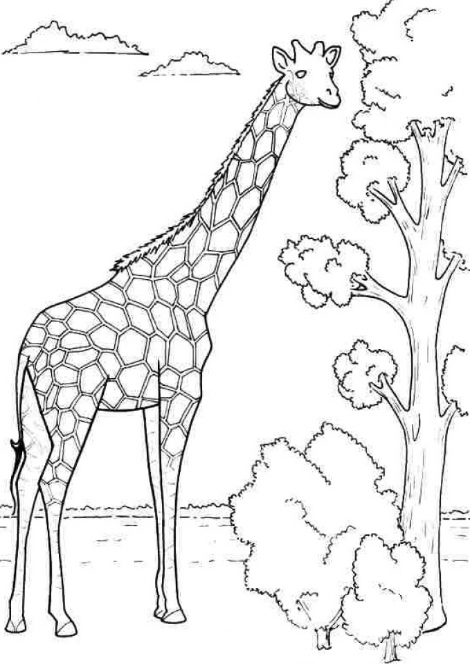 Giraffe free coloring pages for Giraffe coloring pages to print