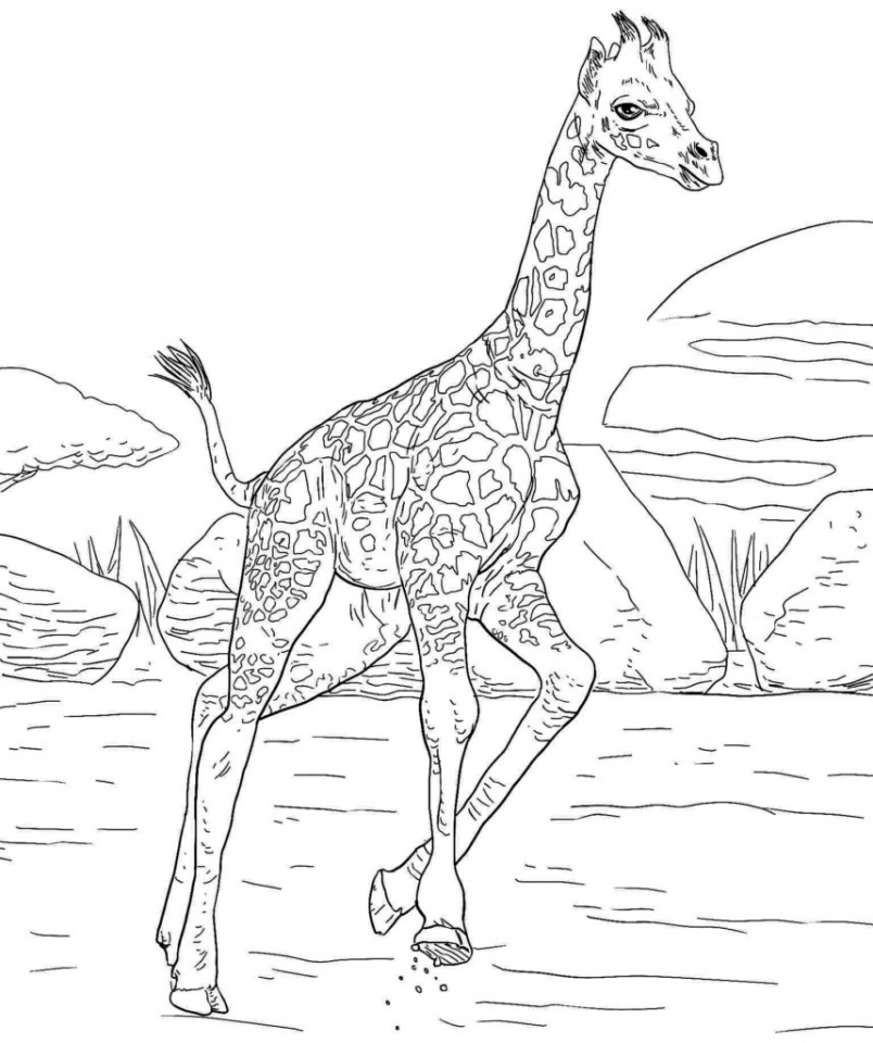 Get This Giraffe Coloring Pages Hard Printables for Older Kids 46178