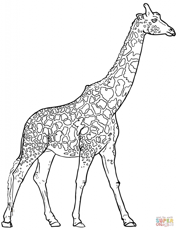 Get This Giraffe Coloring Pages Realistic Animals 53182
