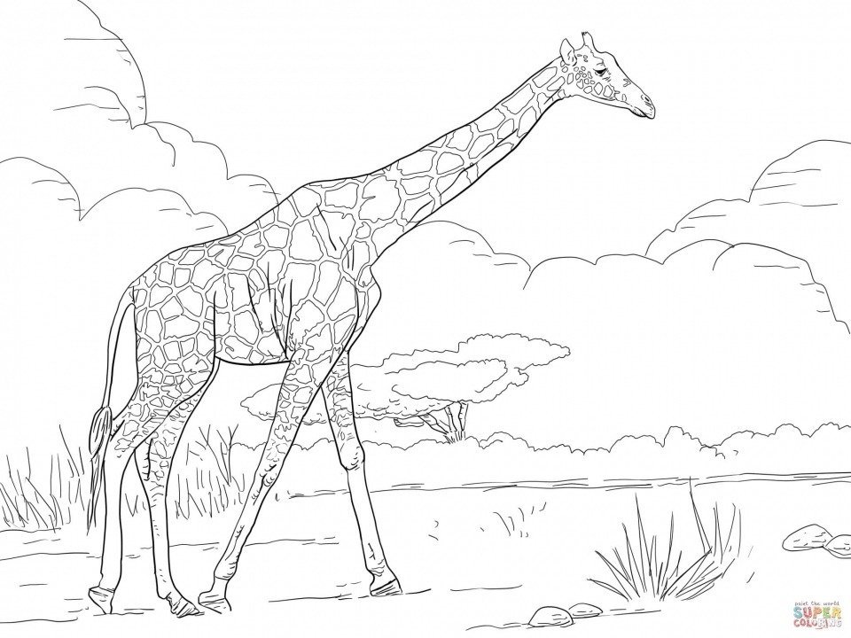 Kleurplaat Flamingo Jungle Get This Giraffe Coloring Pages Realistic Animals 99562