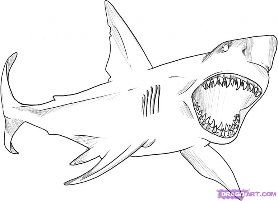 printable tiger shark coloring pages - photo#39
