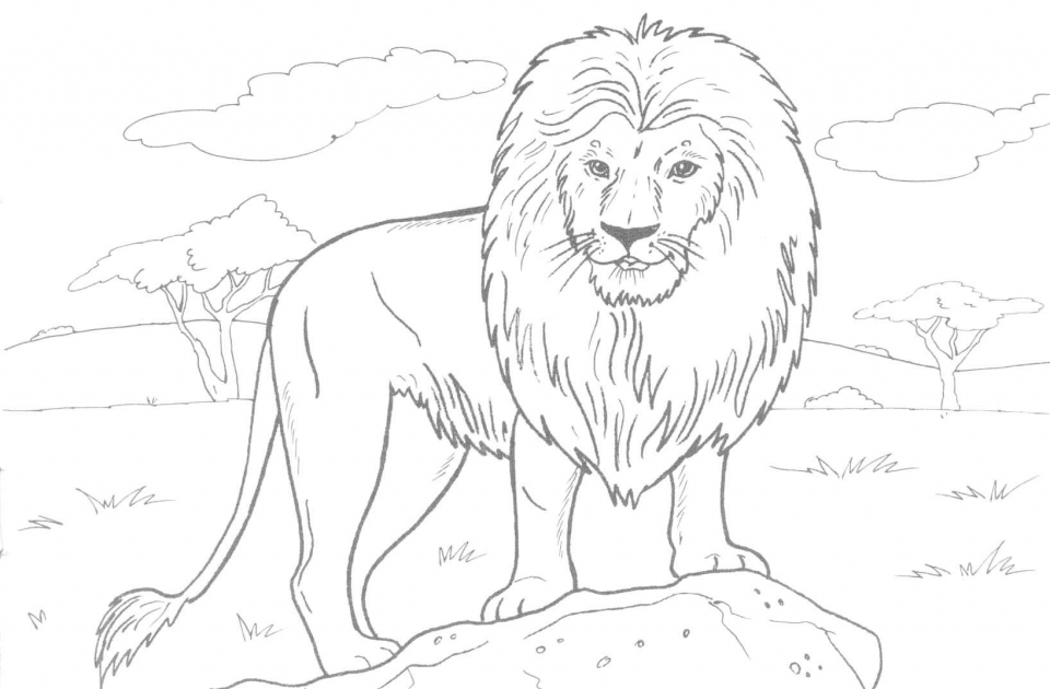 Get This Lion Coloring Pages for Adults to Print 33648