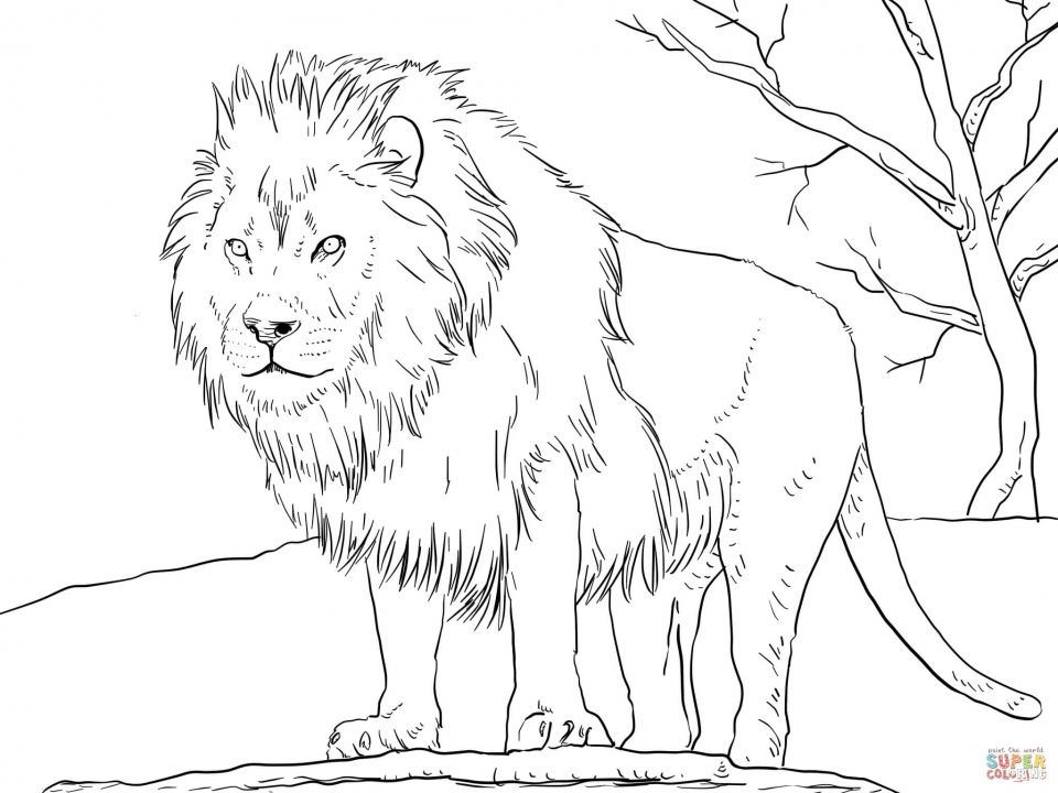 Lion Coloring Pages For Adults To Print 41677