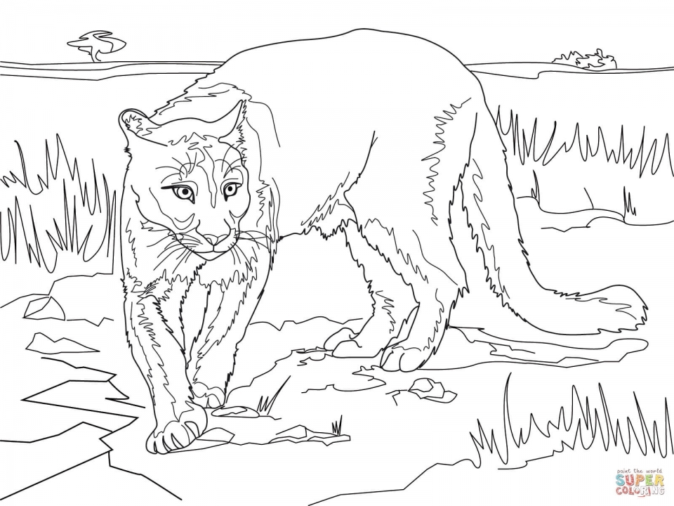 Get This Mountain Lion Coloring Pages Printable 56265